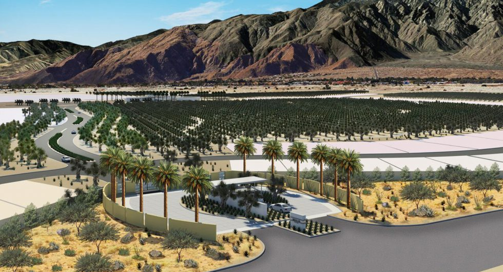 Goodbye golf course, hello olive groves! New Palm Springs enclave to become an 'agri-hood'